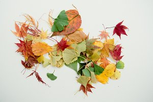 a photo of messy autumn leaves