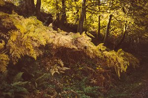 A photo of ferns in autumn