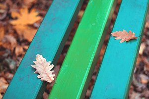 Autumn leaves on colorful bench