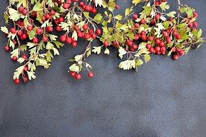 hackberry on gray