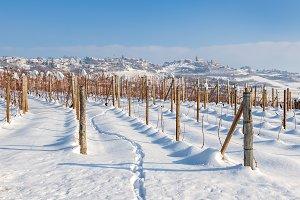 Snowy vineyards of Piedmont, Italy.