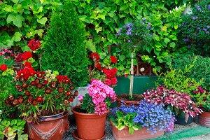 Hause plants.