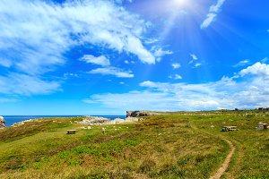 Summer sunshine coast.