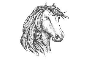 Arabian mare horse