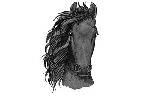 Horse sketch of arabian stallion