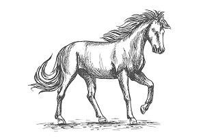 Horse isolated sketch