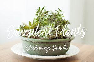 Succulent Garden Stock Photo Bundle