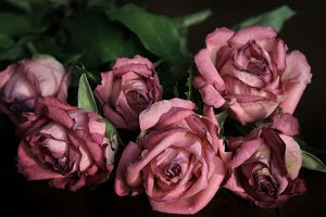 Fading roses #1