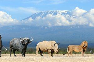 Big five africa