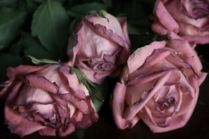 Fading Roses #2