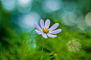 8 petals