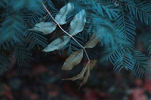 Autumn forest detail