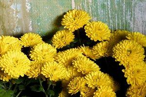 Yellow Chrysanthemum Frame