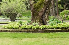 Hosta garden and lawn in a park
