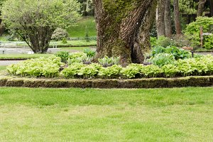 Hosta garden and lawn in a park