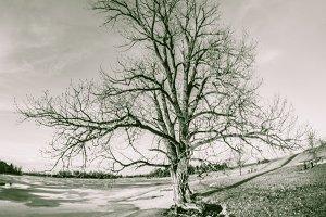 Winter at lake B&W