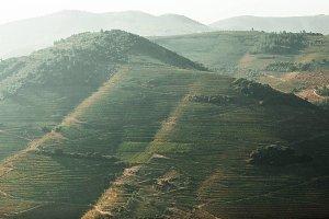 Douro Valley - Portugal