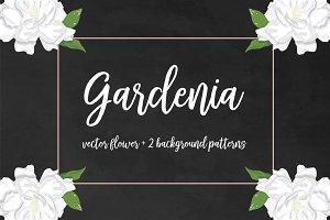 Gardenia vector