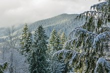 Snow fall covers trees and mountains
