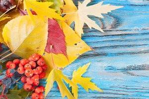 Autumn leaves on a blue background