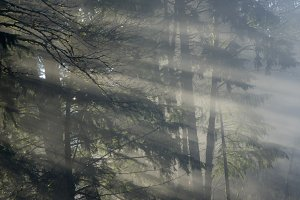 Sunbeams shining through fog