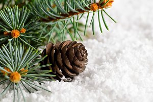 christmas and new year fir-tree on snow