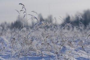 Grass ice