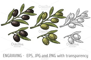 Olives on branch with leaves