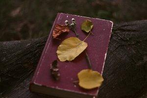 Vintage Book of Poetry