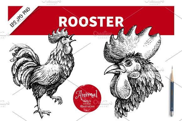 Hand Drawn Sketch Rooster Vector Set