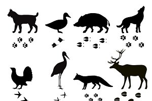 Wild animals vector paw footsteps