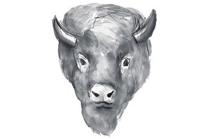American Bison Head Watercolor