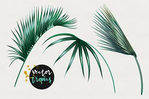 Palm leaves jungle illustrations