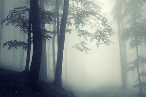 Path in dark forest with fog