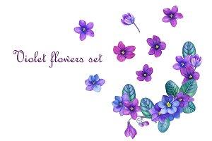 Violet flowers set