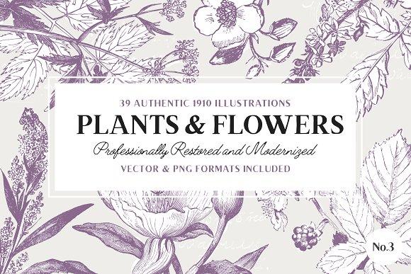 39 Plant & Flower Illustrations No.3 - Illustrations