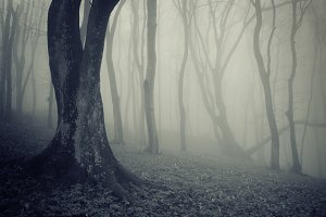 Haunted Halloween forest