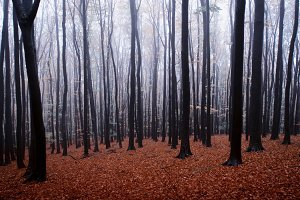 Autumn forest with frost on trees