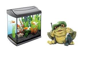 Toad fishing at aquarium, isolated