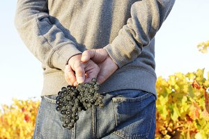 man in vineyards in autumn
