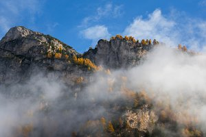 Golden larches in autumn forest
