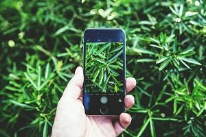 Smartphone Photo Capture