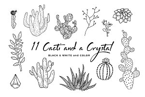 11 Cacti and 1 Crystal Set