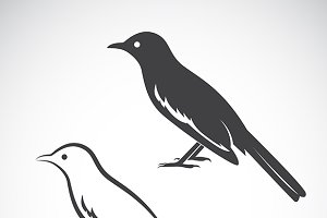 Vector of magpie design