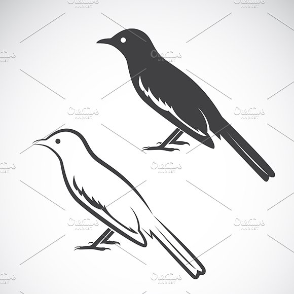Vector of magpie design