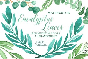 Watercolor Leaves Clipart Eucalyptus