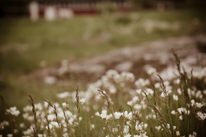 Abstract vintage natural  background