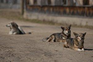 Dog family
