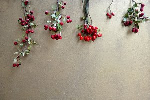 rosehips and hackberry
