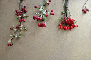hackberry and rosehips
